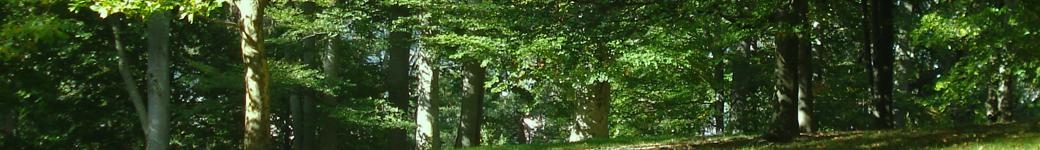 Portal –  Viện Điều tra, Quy hoạch rừng